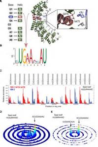 protein l binding specificity cooperativity in rna protein interactions global analysis