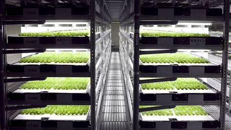 Galerry indoor hydroponic systems