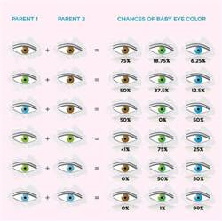 genetic eye color if rachael s were green and deckards were not brown
