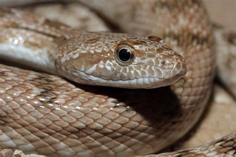 top 25 most dangerous animals in the world pouted online top 25 deadliest animals in the world quiet corner