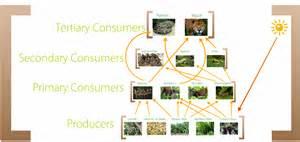 The Tropical Rainforest Plants - food web tropical rainforest biome