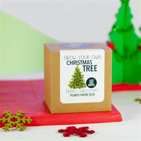 grown your own christmas tree kit by plants from seed