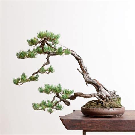 1 000 件以上の bonsai のおしゃれアイデアまとめ pinterest の画像 盆栽の木 と 盆栽