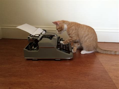 Cat In The Essay by Story Ideas From A Cat