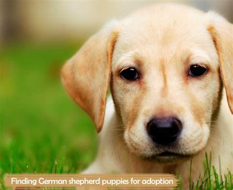german shepherd dogs for adoption the better
