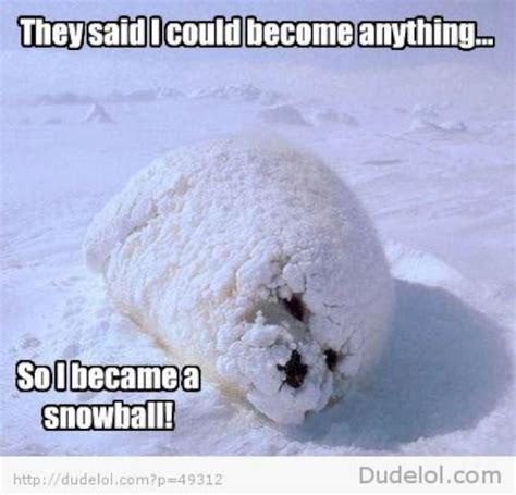 Harp Meme - cute seal memes 12 pics