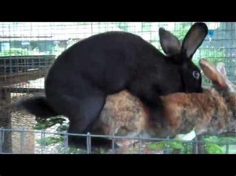 animal mating rabbit cat bunny cat mate rabbits mating buzzpls