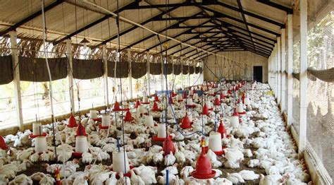 design home how to start over starting broiler poultry farming business plan pdf