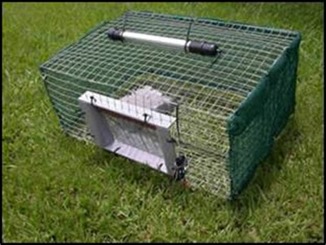 How To Catch A Toad In Your Backyard by Toads