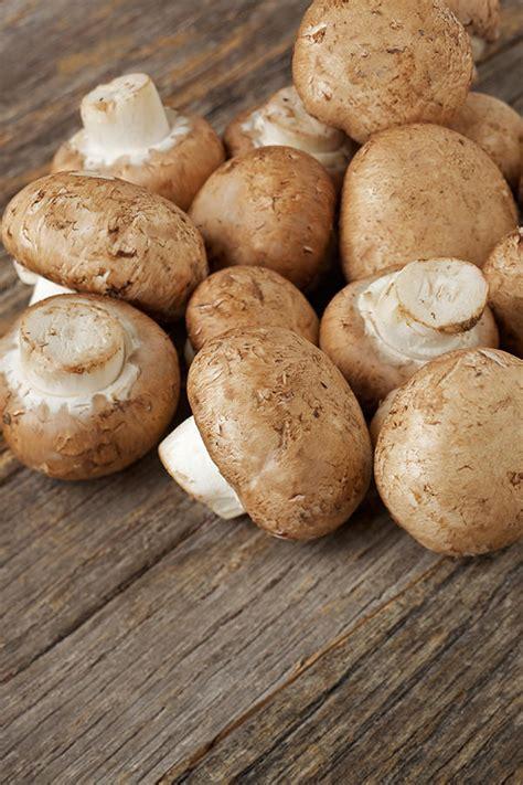 wann pilze sammeln pilze frisch aus dem wald wann ist pilzsaison feinschmecker