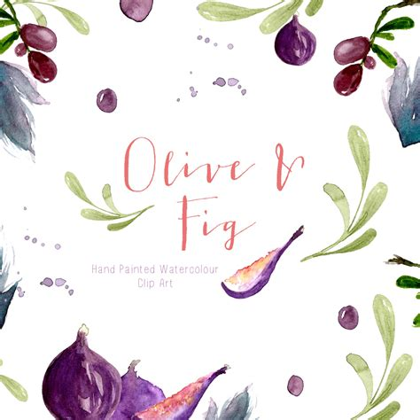 olive art watercolour clip art olive and fig