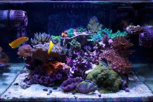 Saltwater Aquascape Arkayology 2014 Featured Nano Reefs Featured Aquariums