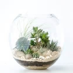 Classic Coast   Happy Place Terrariums