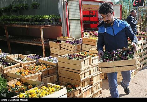 new year flower market 2016 flower market blooms in tehran ahead of new year