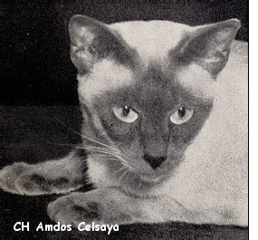 We Are The Cat Excerpt by The Way We Were Excerpts From The 1961 Cfa Yearbook Part 4