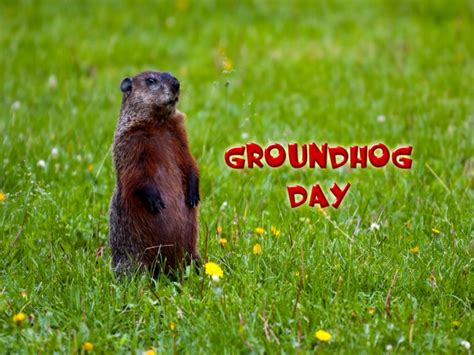 groundhog day ultra hd happy groundhog day hd wallpaper for android iphone