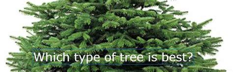 what type of christmas tree lasts the longest types of tree how to choose the right type pyracantha co uk