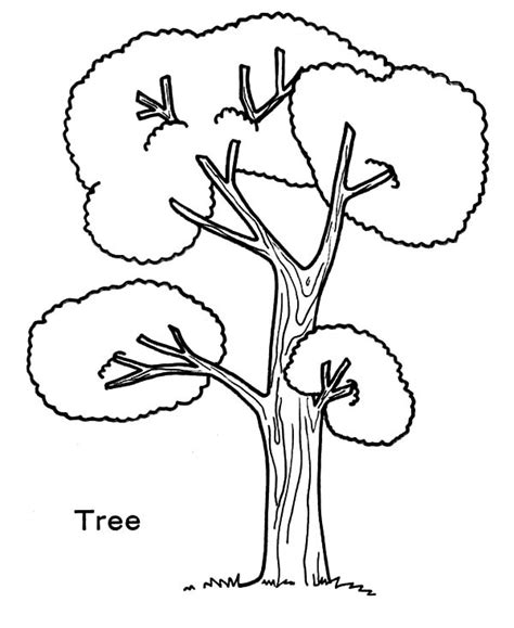 Size Tree Coloring Page Tree Produce Oxygen For Our Life On Arbor Day Coloring by Size Tree Coloring Page