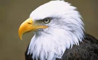 Backyard Wild Animals Endangered Birds Zoo Animals