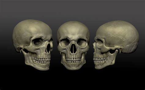 imagenes de calaveras humanas 8 pr 243 ximos passos da evolu 231 227 o humana
