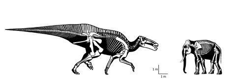 Car Armchair African Bush Elephant V Shantungosaurus Giganteus
