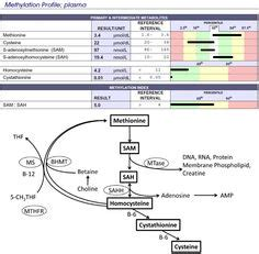 How To Interpret Detox Profile Genetic Genie by Article On The Importance Of Avoiding Folic Acid And