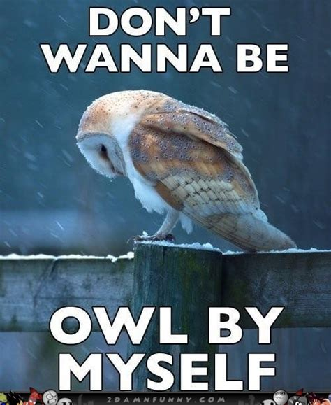 Sad Animal Memes - sad owl meme feels the loneliness of a cold night
