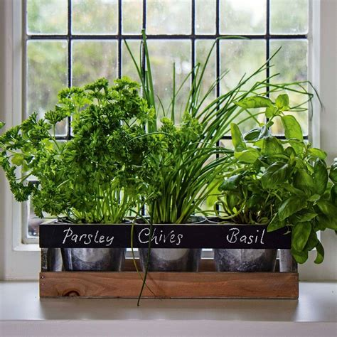 herb pots for windowsill garden planter box wooden indoor herb kit kitchen seeds