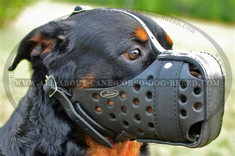 how to your not to attack other dogs agitation leather muzzle for powerful rottweiler pet supplies
