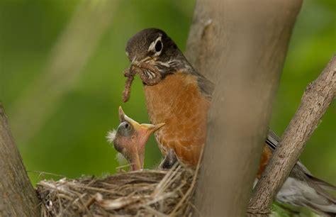 backyard wildlife sanctuary wild animal sanctuary create backyard habitat effective