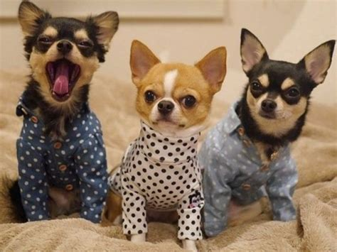 puppies in pajamas puppies in pajamas is the snoozebutton for your playbuzz
