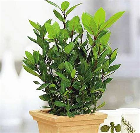 Zimmerpflanze Schlafzimmer by Pflegeleichte Zimmerpflanzen Im Schlafzimmer Sorgen F 252 R