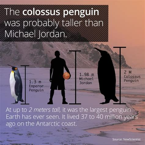 the fall penguin modern b00gedd414 the colossus penguin