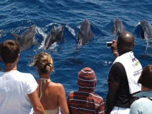 catamaran delfin playa gran canaria tagliche katamaran delfin boot kreuz fahrt gran canaria