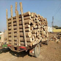Poplar Wood Populus Wood Latest Price Manufacturers