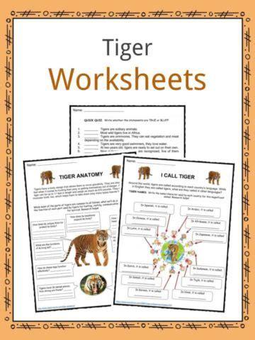 animal worksheets animal facts  kids kidskonnect