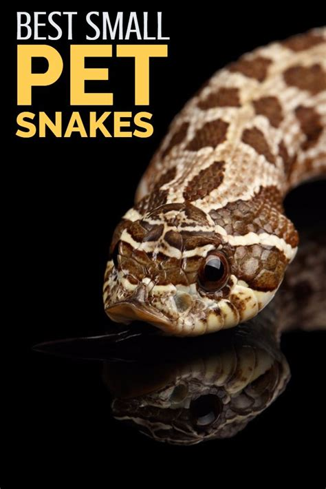 micropython for the of things a beginnerã s guide to programming with python on microcontrollers books best 25 snake ideas on snake baby