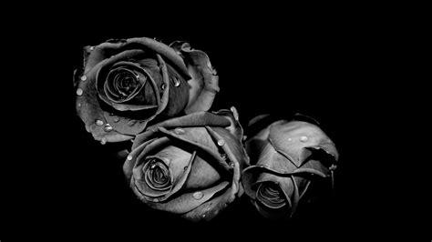 wallpaper tribal hitam putih free background bunga hitam putih download free clip art
