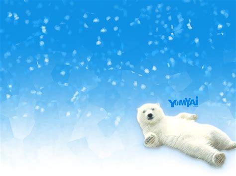 polar bear wallpapers desktop wallpapers