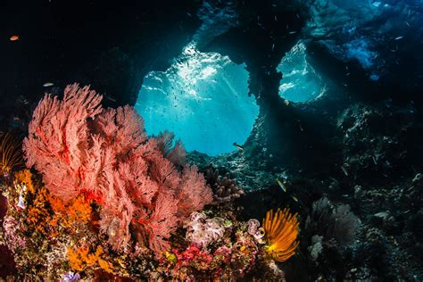 dive di raja at a heaven in the eastern of indonesia