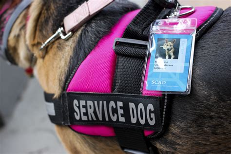 emotional service defining emotional service and emotional support animals scad district