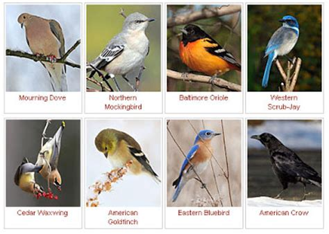 ornithology birds life history all about birds free