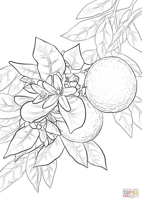 orange blossom coloring page free printable coloring pages