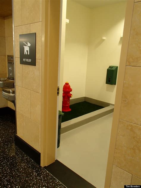 airport bathroom san diego airport dog bathroom keeps pets and owners happy photo huffpost