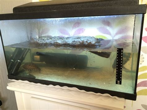 aquarium design yorkshire turtle tank full set up 2 turtles middlesbrough north