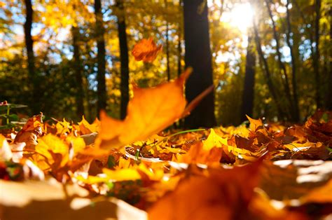 fall leaves desktop background google search autumn