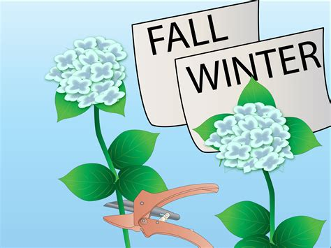 how to prune hydrangea bushes 5 steps with pictures wikihow