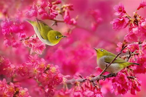 beautiful color 30 bird pictures with most beautiful colors