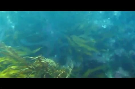octopus steals octopus steals and filmmaker chases it