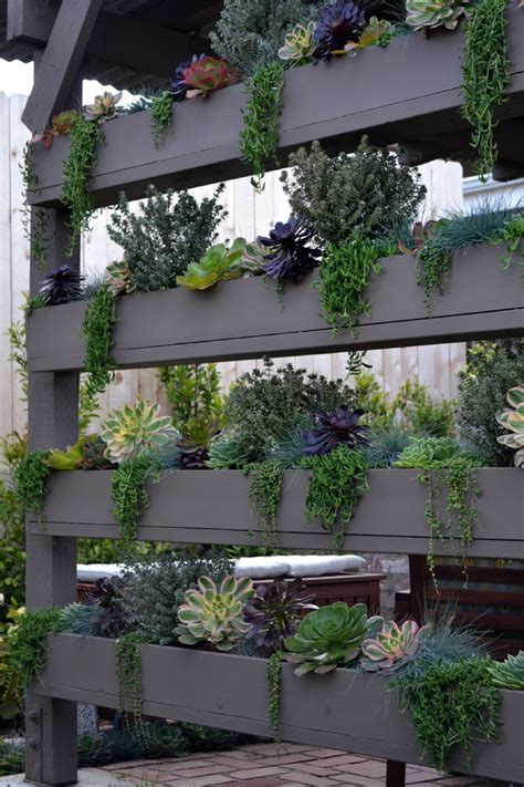 indoor vertical succulent garden 70 indoor and outdoor succulent garden ideas shelterness